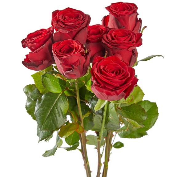 Losse rozen rood